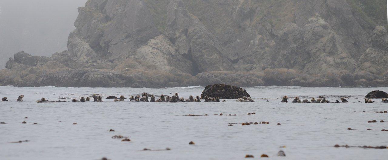 07 Sea otters south of Cape Johnson.JPG