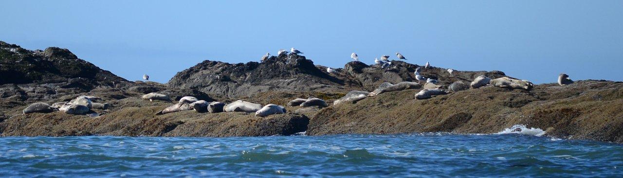12 Seals in Giants' Graveyard.JPG