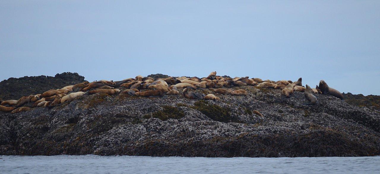 DSC_0224 sea lions.JPG