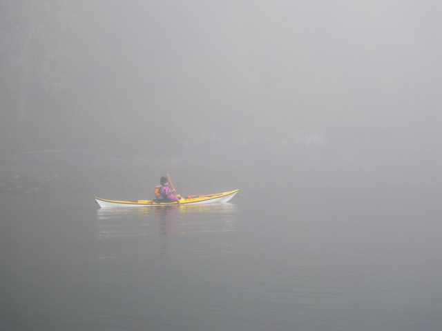 Heading back to Telegraph Cove in fog.jpg