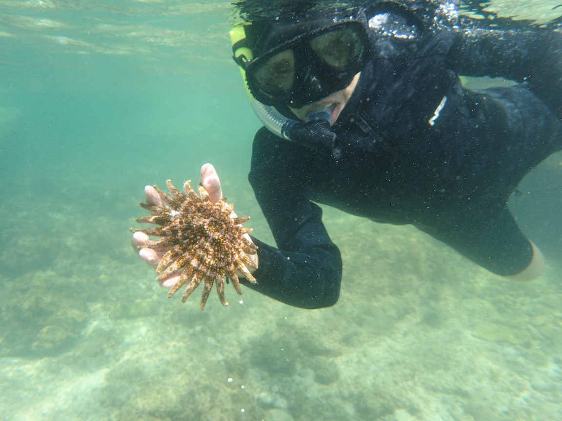 snorkeling-sunflowerstar.JPG